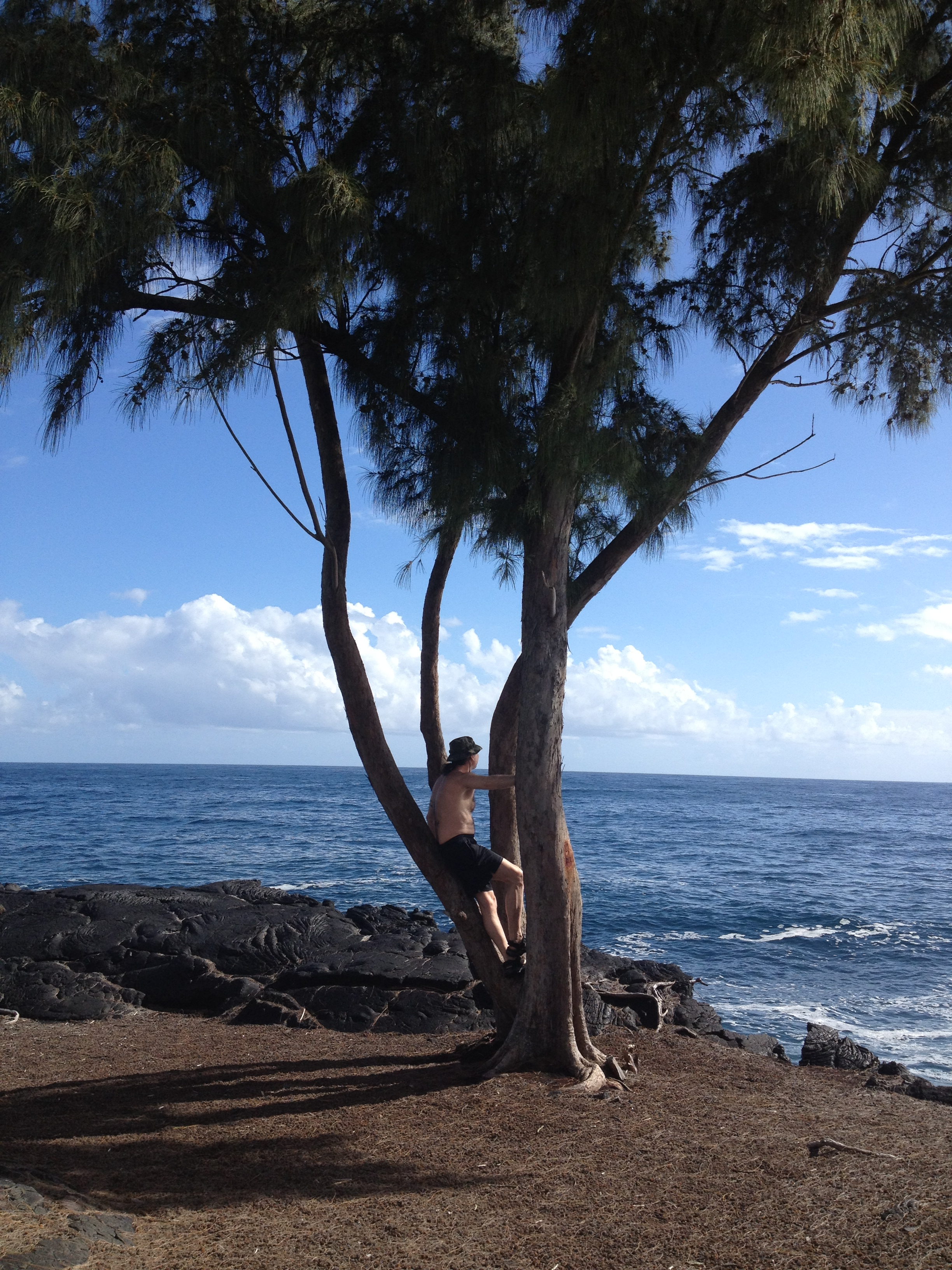 Kai on tree by ocean