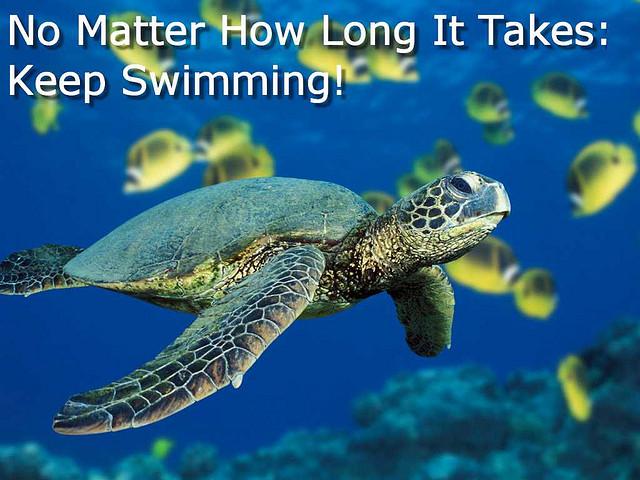 turtle swiimming