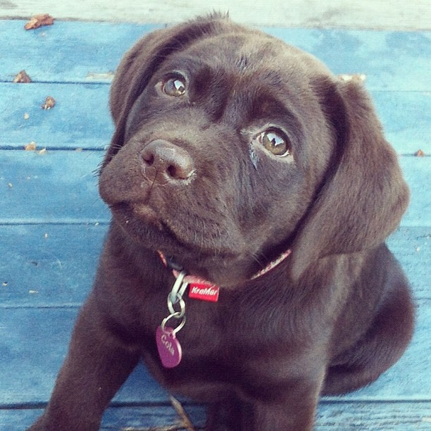 puppy dog making big eyes