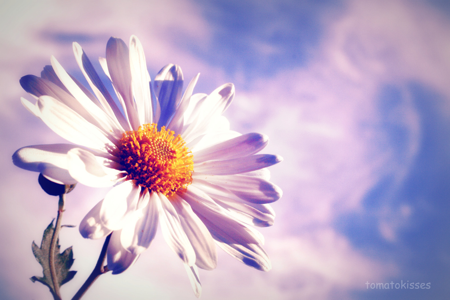 white flower and sky
