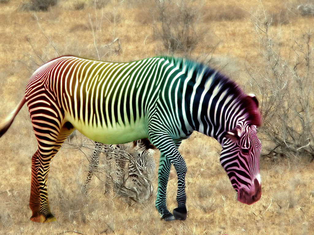 zebra_rainbow_by_ycanwood-d5ugunf