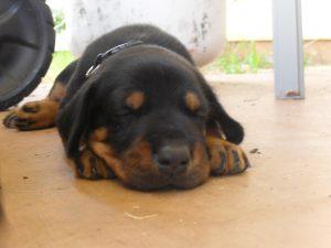 Le'a Puppy