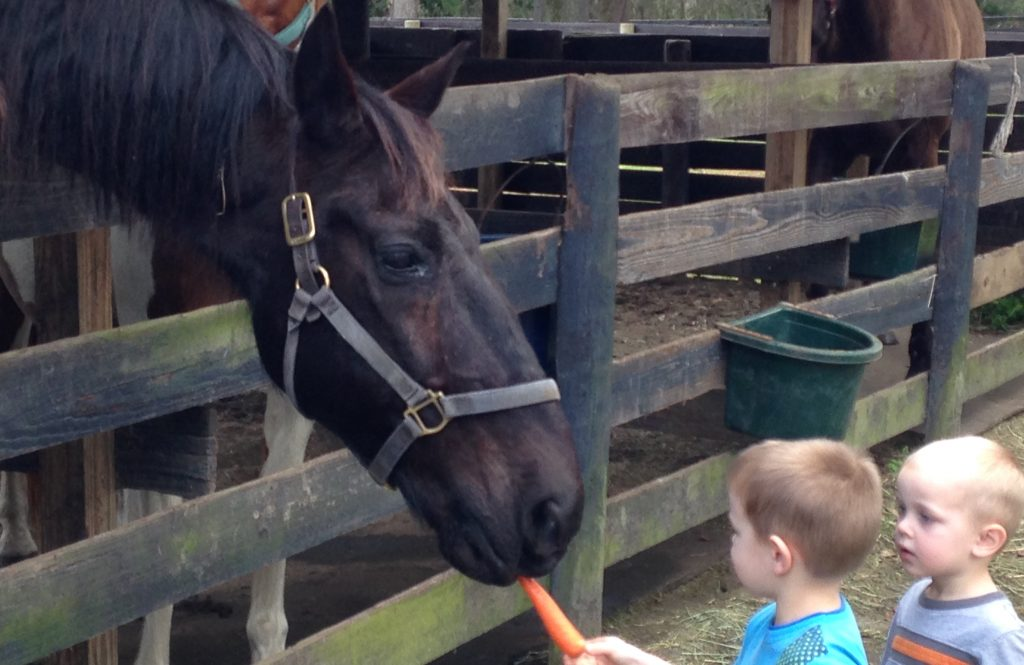 Children feeding a horse a carrot