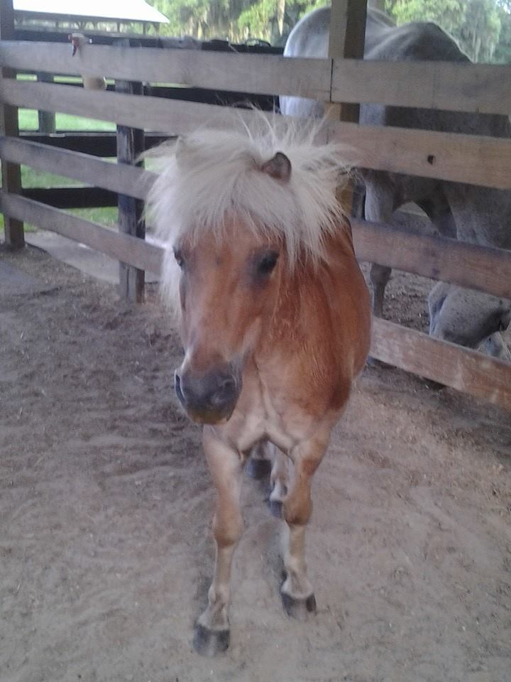 "A pony with ""bad hair"""