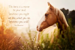 The horse is a mirror to your soul. Sometimes you might not like what you see. Sometimes you will.
